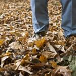 Herbstanfang – Wann beginnt der Herbst? (Herbstanfang – Wann beginnt der Herbst?)