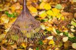 herbstlaub (Herbstlaub sinnvoll verwenden – Was tun mit den Herbstblättern?)