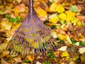 Herbstlaub sinnvoll verwenden – Was tun mit den Herbstblättern?