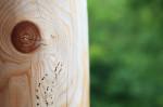 Holzwurmbekämpfung (Holzwurmbekämpfung – Was tun gegen Holzwürmer?)