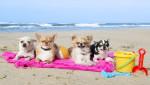hunde-im-urlaub (Tierpensionen – Wohin mit Hund & Katze in der Urlaubszeit?)