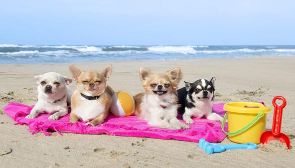 Hunde im Urlaub