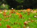 Rasenpflege im Herbst - Was ist zu tun?
