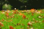 rasenpflege-herbstlaub (Rasenpflege im Herbst – Was ist zu tun?)