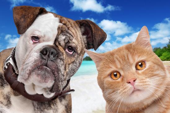 tierpensionen  wohin mit hund  katze in der urlaubszeit