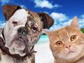 Tierpensionen – Wohin mit Hund & Katze in der Urlaubszeit?