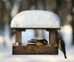 voegel-fuettern-winter (Vögel füttern – Was muss man beachten?)