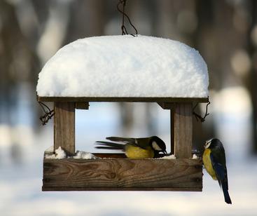 Vögel füttern im Vogelhaus