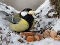 Vögel füttern - Was muss man beachten?