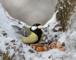 Vögel füttern im Winter (Vögel füttern – Was muss man beachten?)